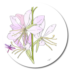 Gaura Flowers And Dragonfly
