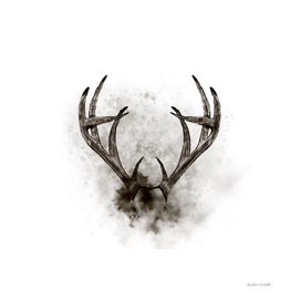 WHITETAIL DEER RACK