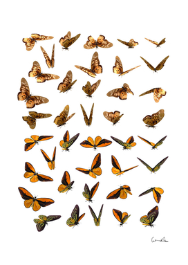 Butterfly butterflies insect swarm