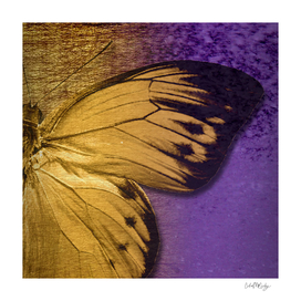 Sepia Butterfly Wing