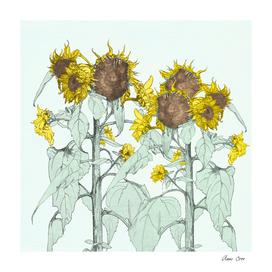 The sunflower brigade