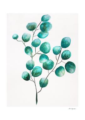 Eucalyptus pant, botanical