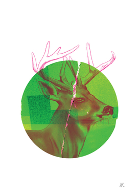 Pink Stag