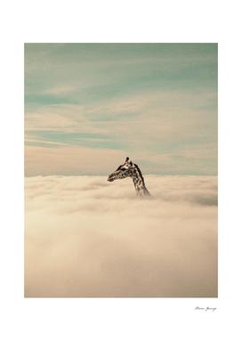 MG0218 I'm a giraffe, I can