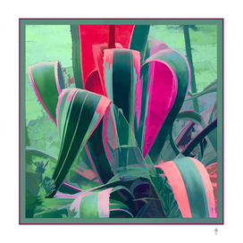 Agave Series - Green Pink