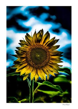 Dark Sunflower