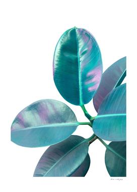 Ficus Elastica Iridescent Glam #1 #tropical #foliage #decor