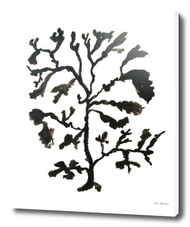 coral black on white