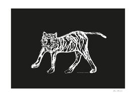 Tiger black-white