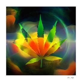 Colors of Marijuana