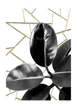 Ficus Elastica Geo #1 #tropical #foliage #decor #art