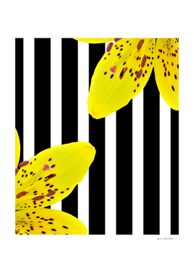 yellow lillies and stripes