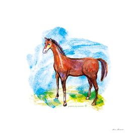 Horse colourfull illustration