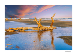 Driftwood at Sunset with Tidal Pools