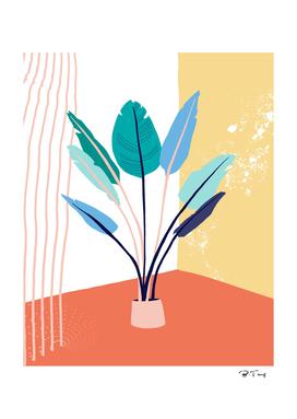 Corner plants