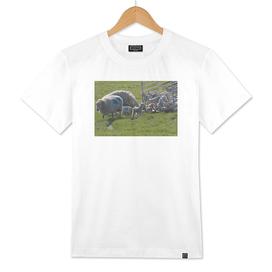 Lambs to Pasture