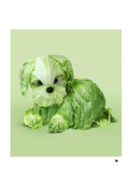 cabbage dog