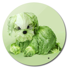 cabbage dog