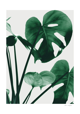 Monstera Vibes #1 #minimal #green #decor #art