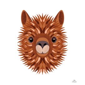 Alpaca serious portrait