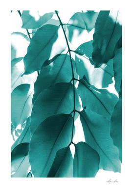 Leaves VI