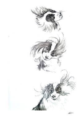 Dog sequence  Illustration
