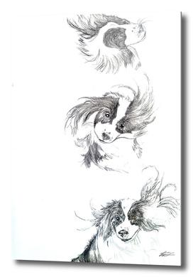Dog sequence  Illustration