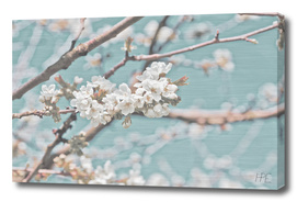 Apple blossom with elegant background