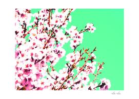 Sakura XII