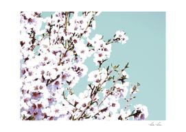 Sakura XIII