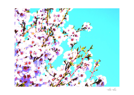 Sakura XIV