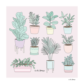 House Plants Guide