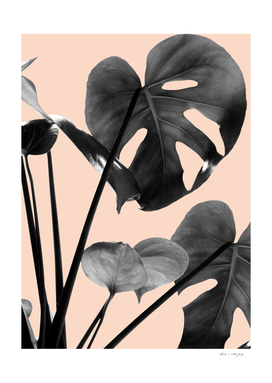 Monstera Vibes #3 #minimal #decor #art
