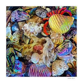 Beautiful Seashells