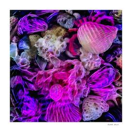 Magical Seashells