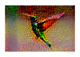 Ornamental Hummingbird