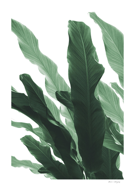 Banana Leaves Jungle #1 #tropical #decor #art