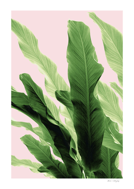 Banana Leaves Jungle #4 #tropical #decor #art