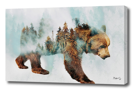 Bear & Forest