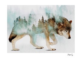 Wolf & Forest