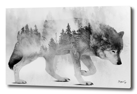 Wolf & Forest 4