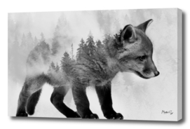 Fox & Forest 2