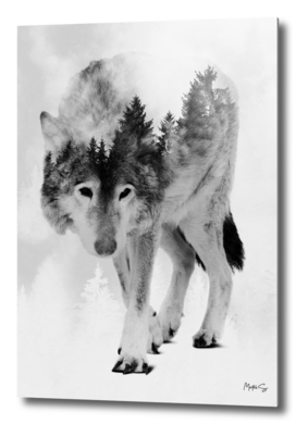 Wolf & Forest 6