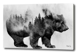 Bear & Forest 3