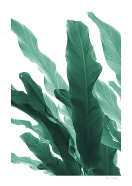 Banana Leaves Jungle #5 #tropical #decor #art