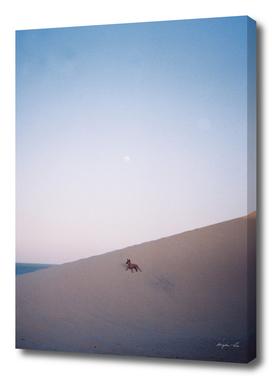 Dunes at Dusk