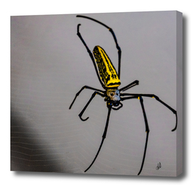 Monastery Spider