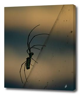 Climbing Spider