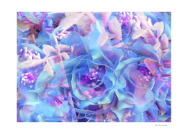 blooming blue rose texture abstract