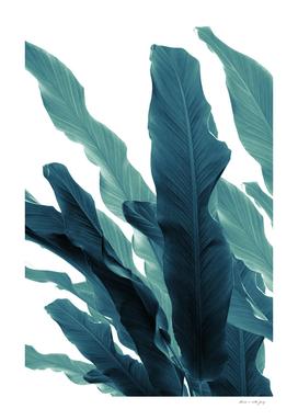 Banana Leaves Jungle #6 #tropical #decor #art